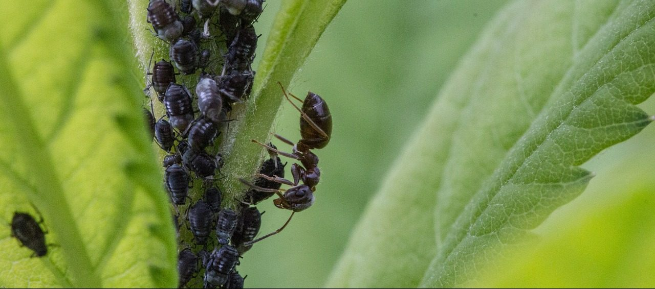 What Causes an Ant Infestation