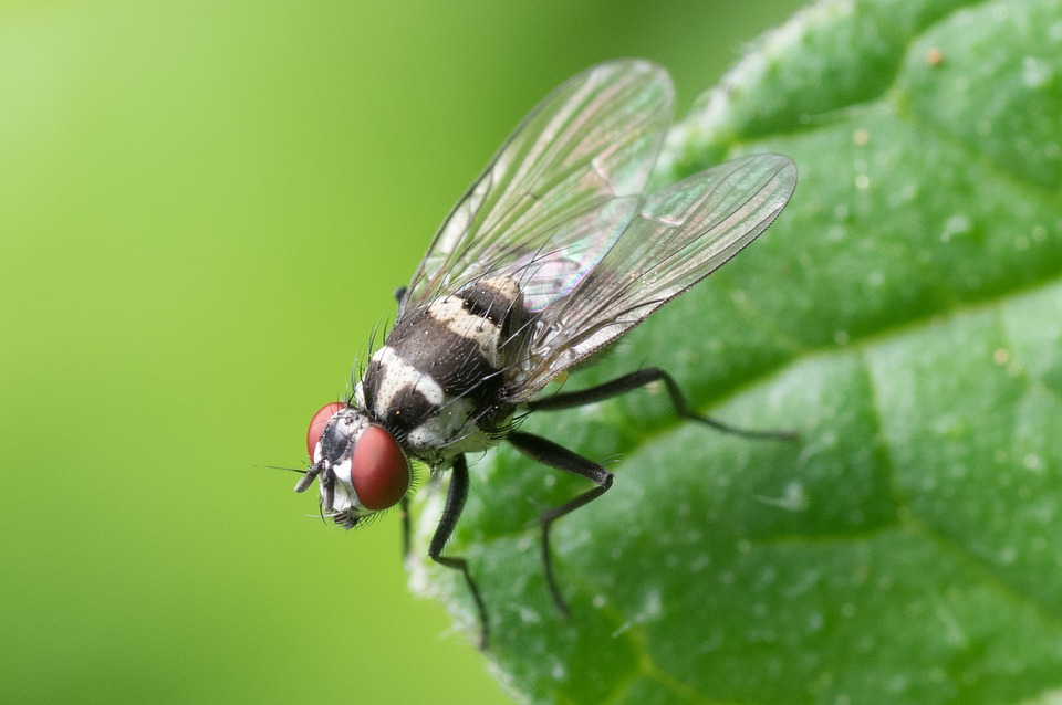 Causes Flies