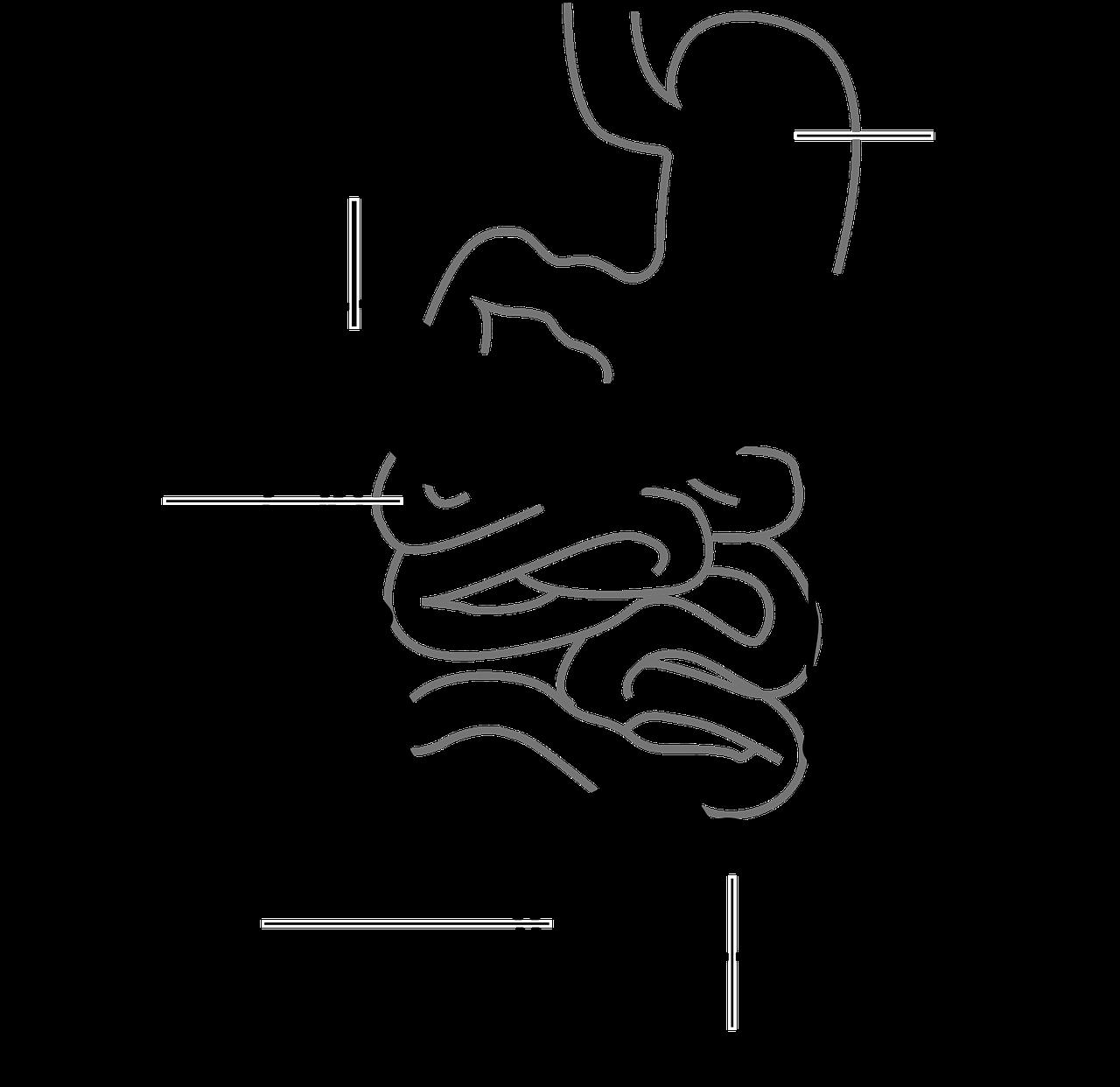 intestine chart
